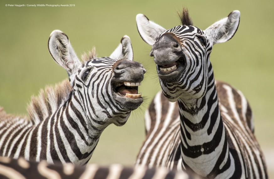 The Comedy Wildlife Photography Awards 2019